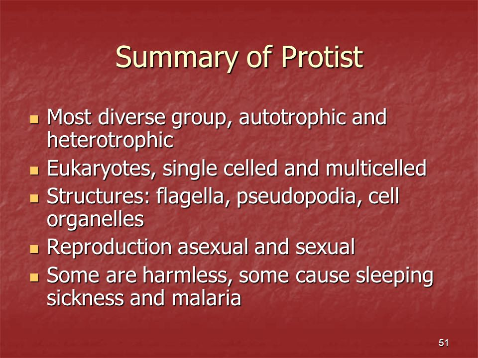 Summary of Protist Most diverse group, autotrophic and heterotrophic