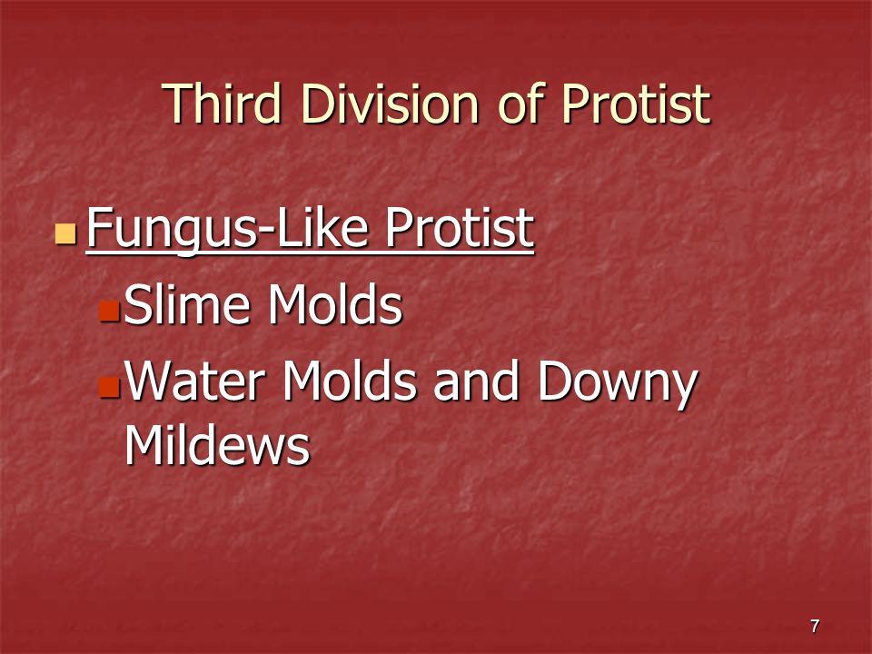 Third Division of Protist