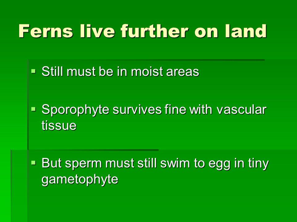 Ferns live further on land