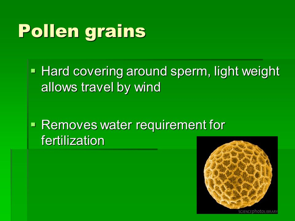 Pollen grains Hard covering around sperm, light weight allows travel by wind.