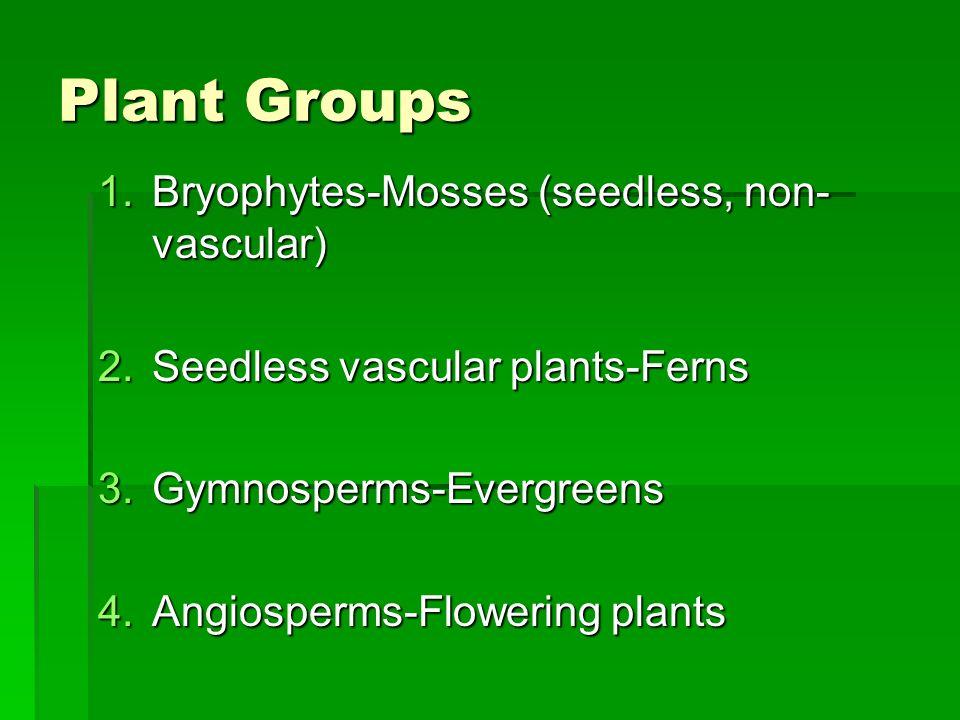 Plant Groups Bryophytes-Mosses (seedless, non-vascular)
