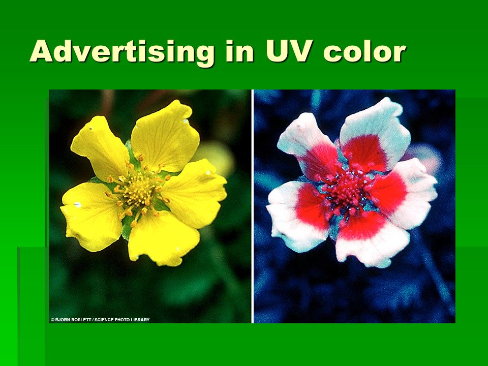 Advertising in UV color