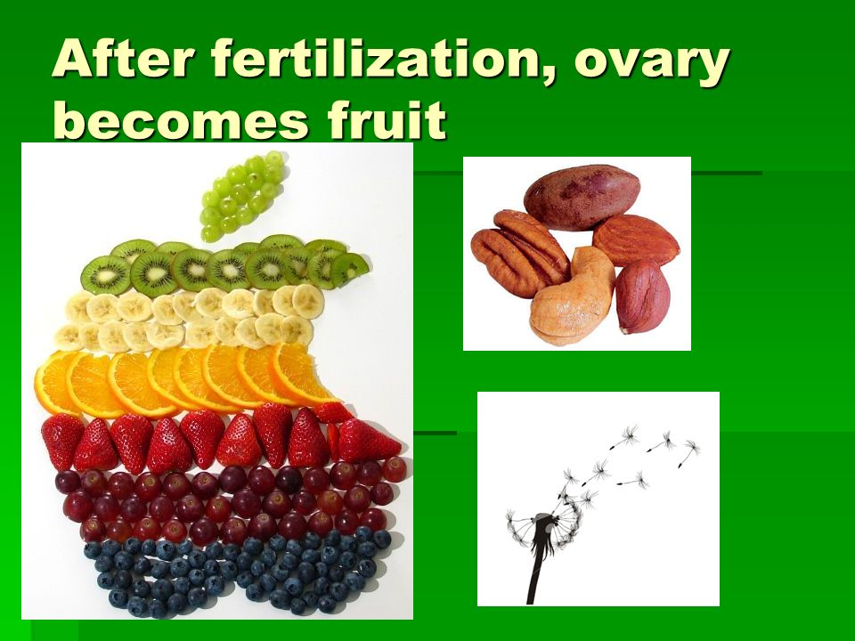 After fertilization, ovary becomes fruit