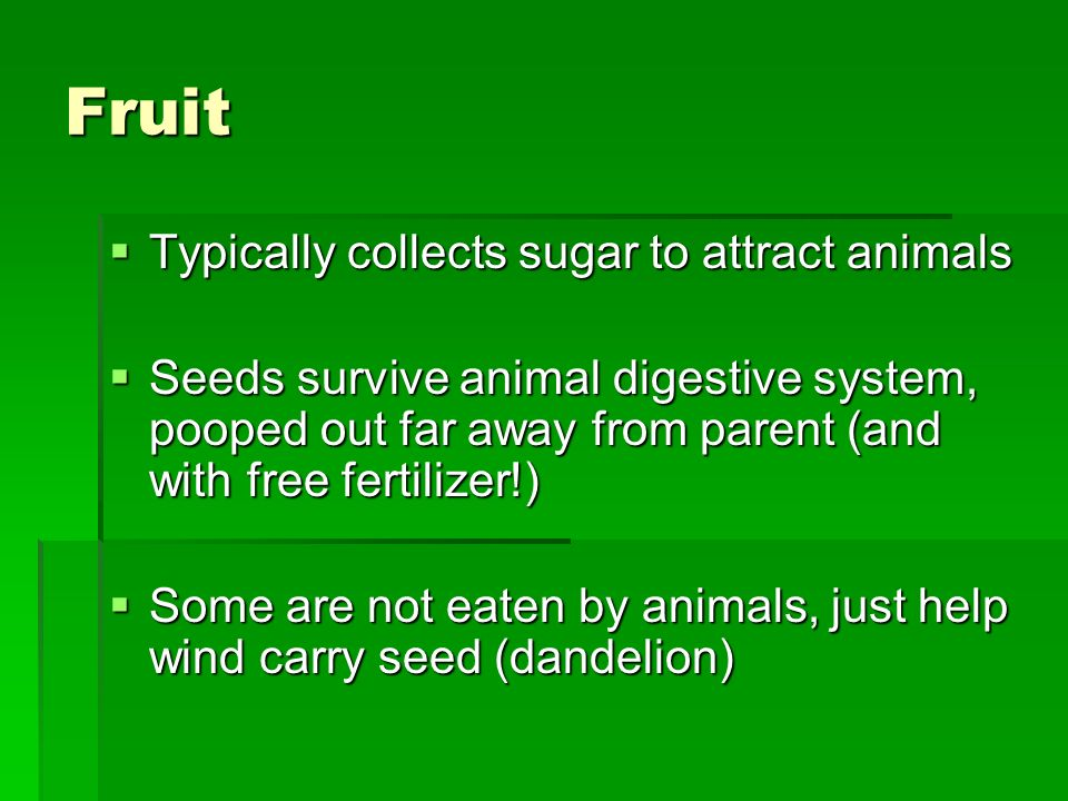 Fruit Typically collects sugar to attract animals