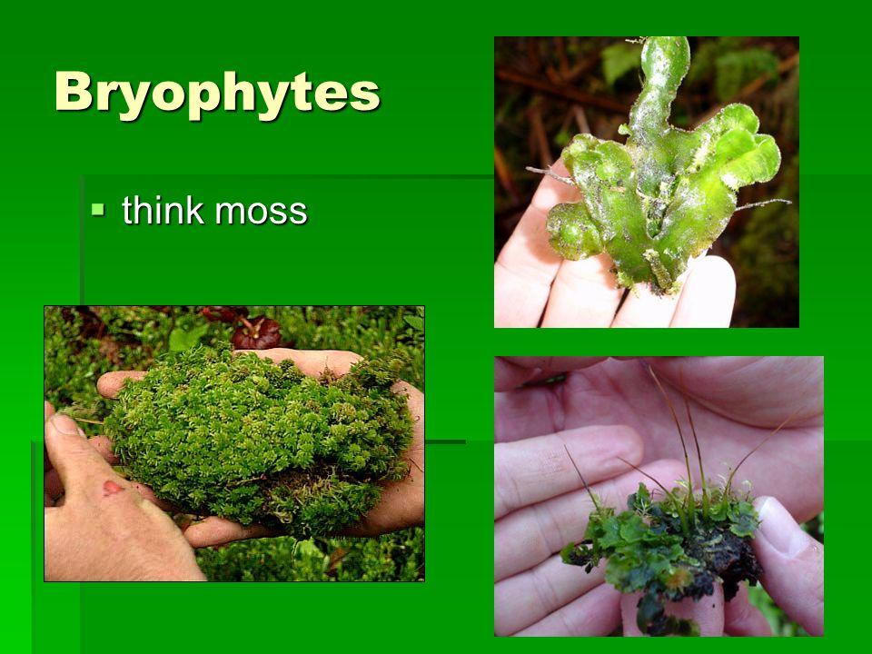 Bryophytes think moss