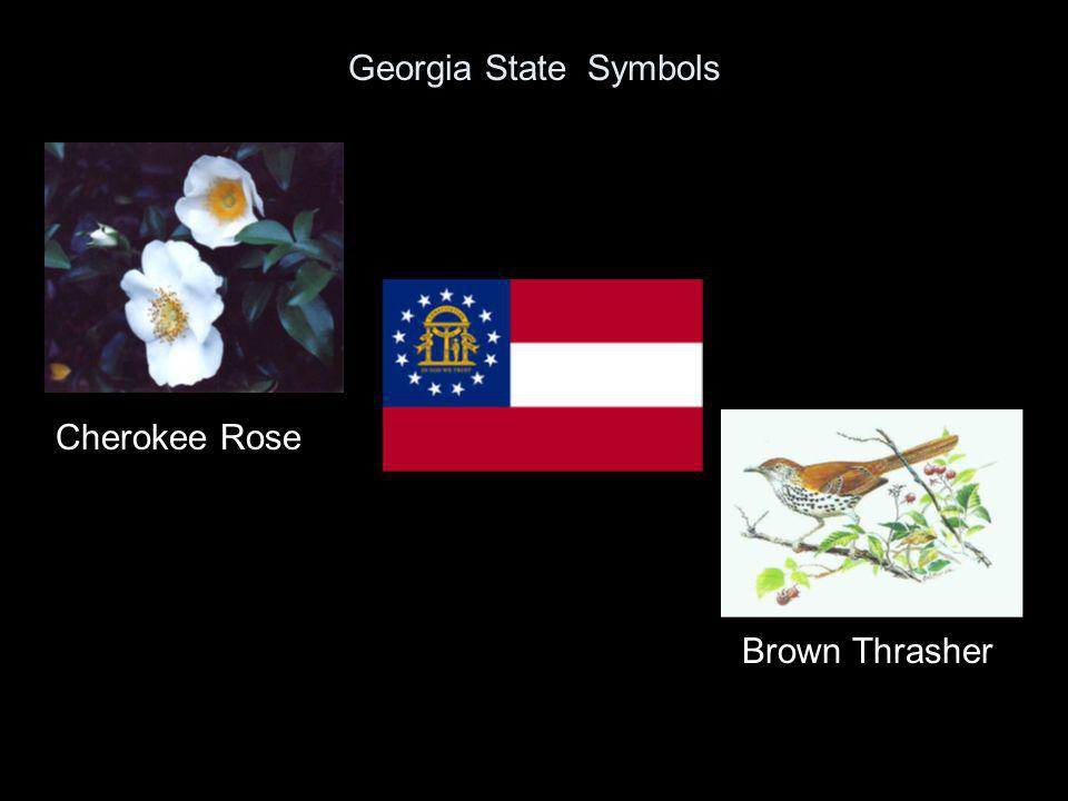 Georgia State Symbols Cherokee Rose Brown Thrasher