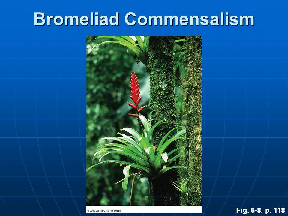Bromeliad Commensalism