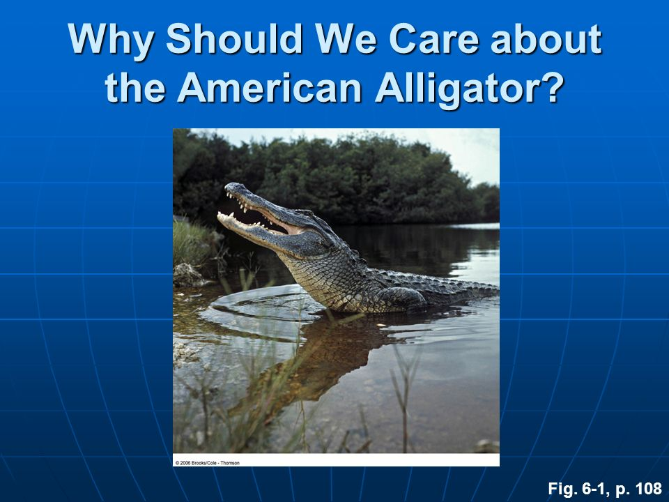 Why Should We Care about the American Alligator