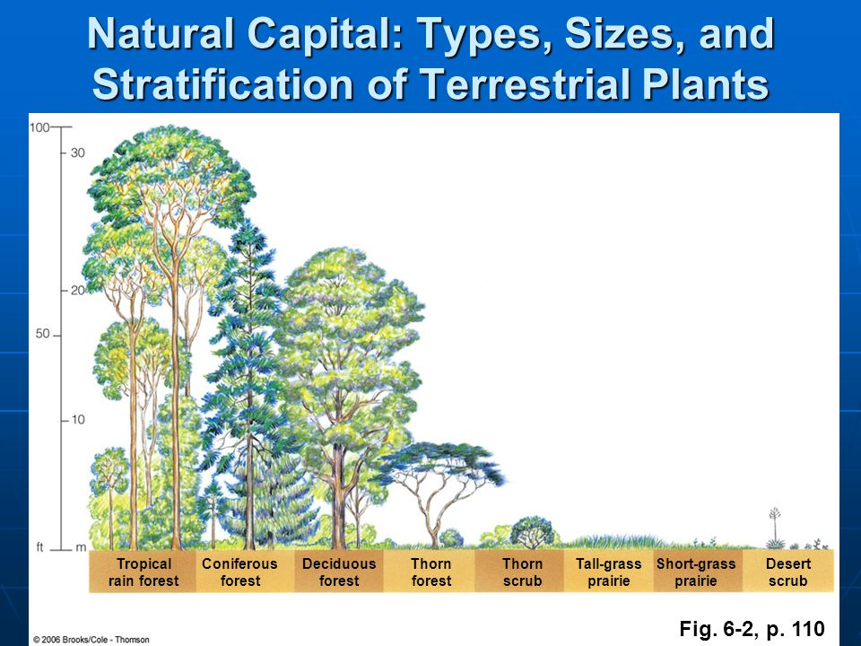 Natural Capital: Types, Sizes, and Stratification of Terrestrial Plants