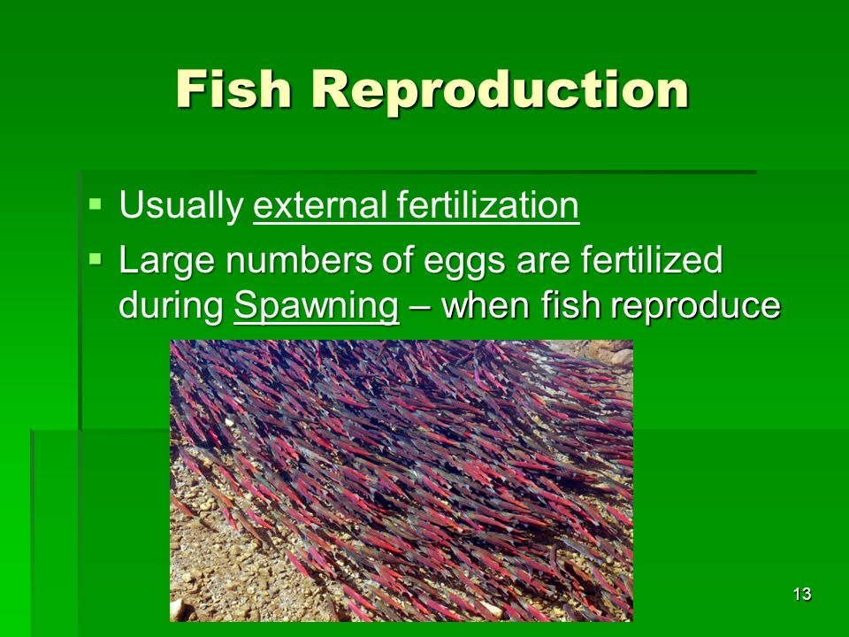 Fish Reproduction Usually external fertilization