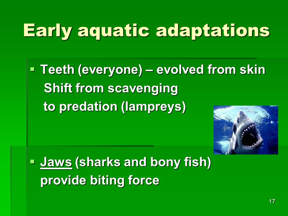 Early aquatic adaptations