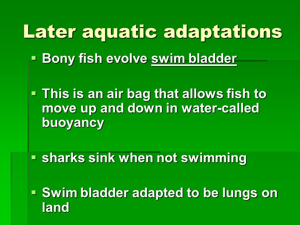 Later aquatic adaptations