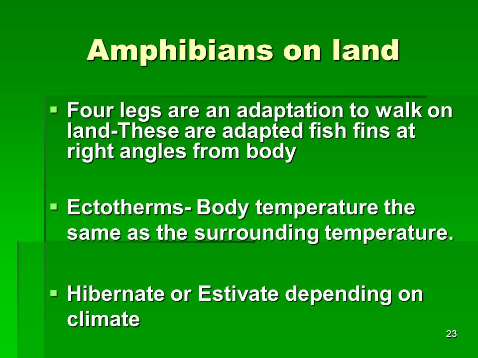 Amphibians on land Four legs are an adaptation to walk on land-These are adapted fish fins at right angles from body.