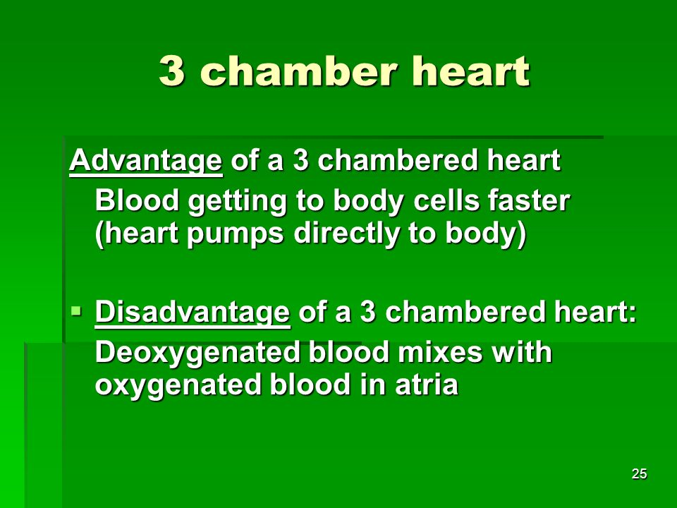 3 chamber heart Advantage of a 3 chambered heart
