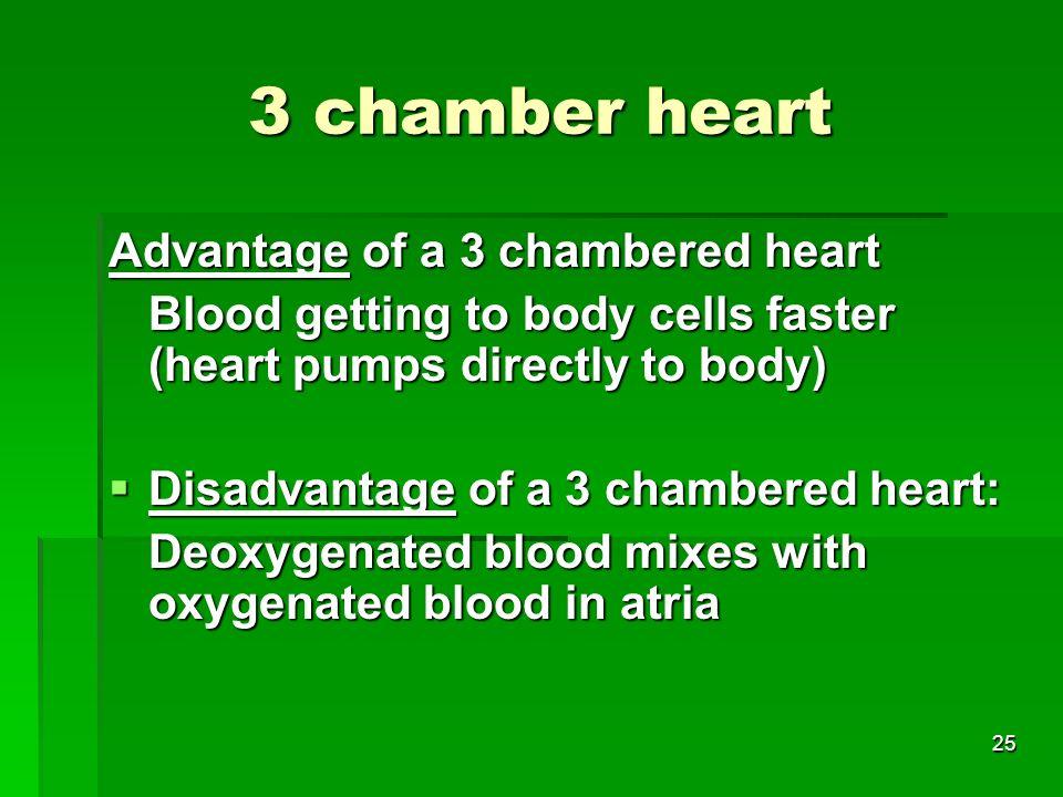 3 chamber heart Advantage of a 3 chambered heart
