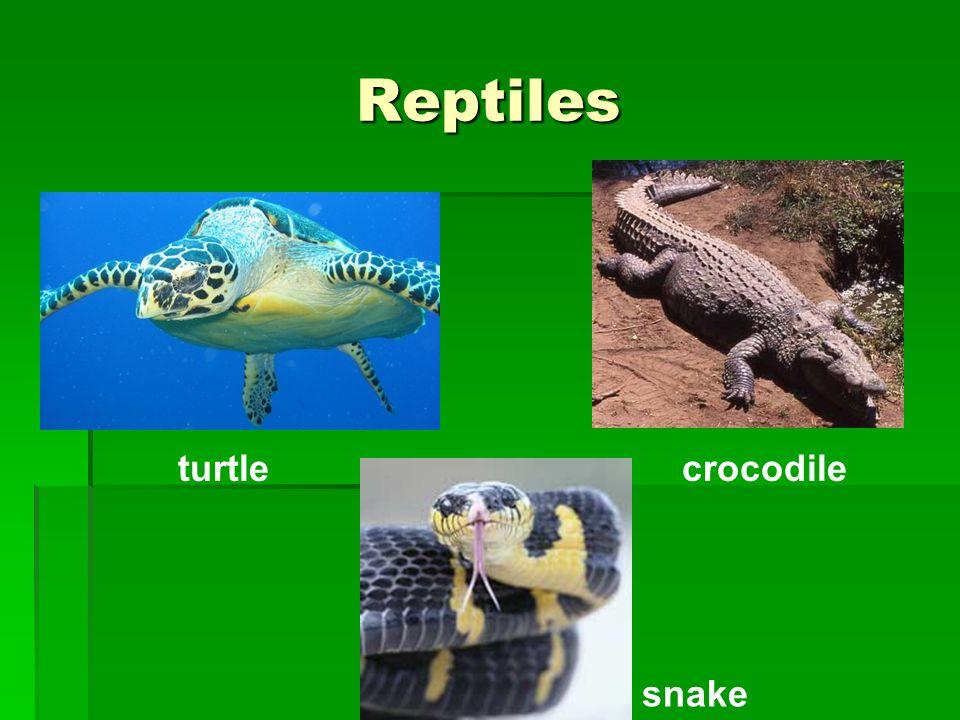 Reptiles turtle crocodile snake