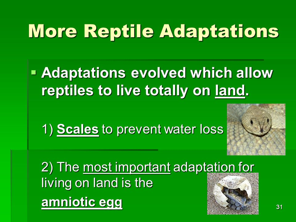 More Reptile Adaptations