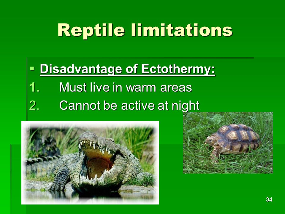 Reptile limitations Disadvantage of Ectothermy: