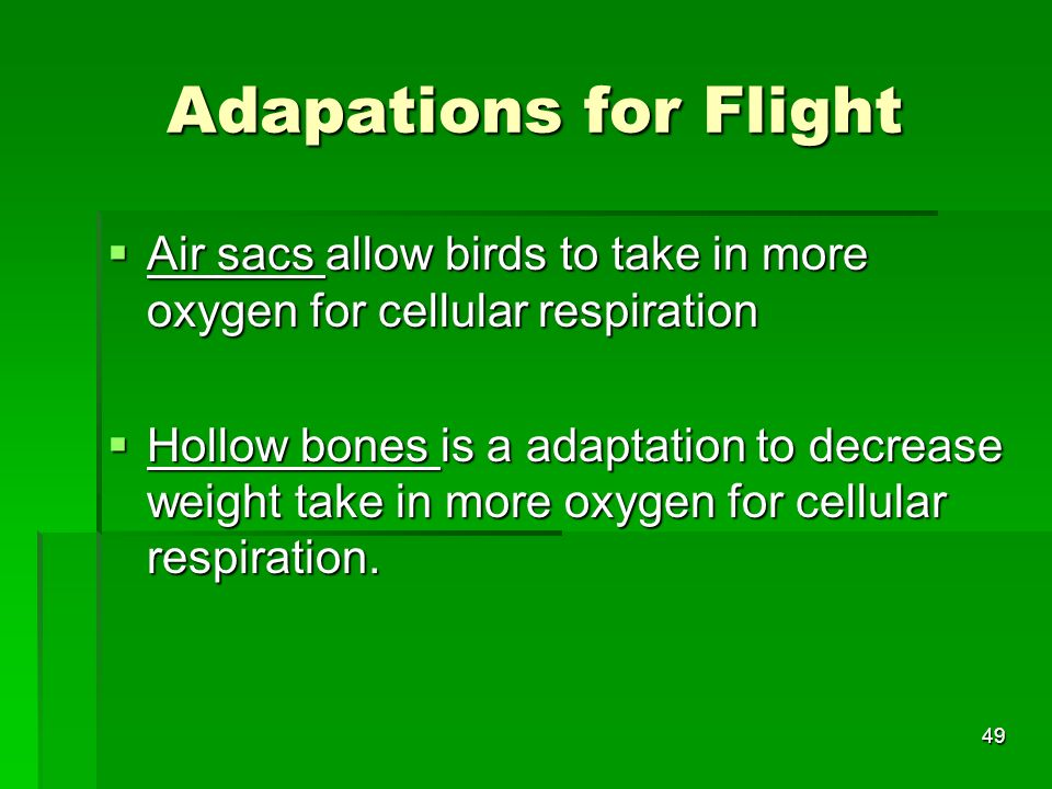 Adapations for Flight Air sacs allow birds to take in more oxygen for cellular respiration.