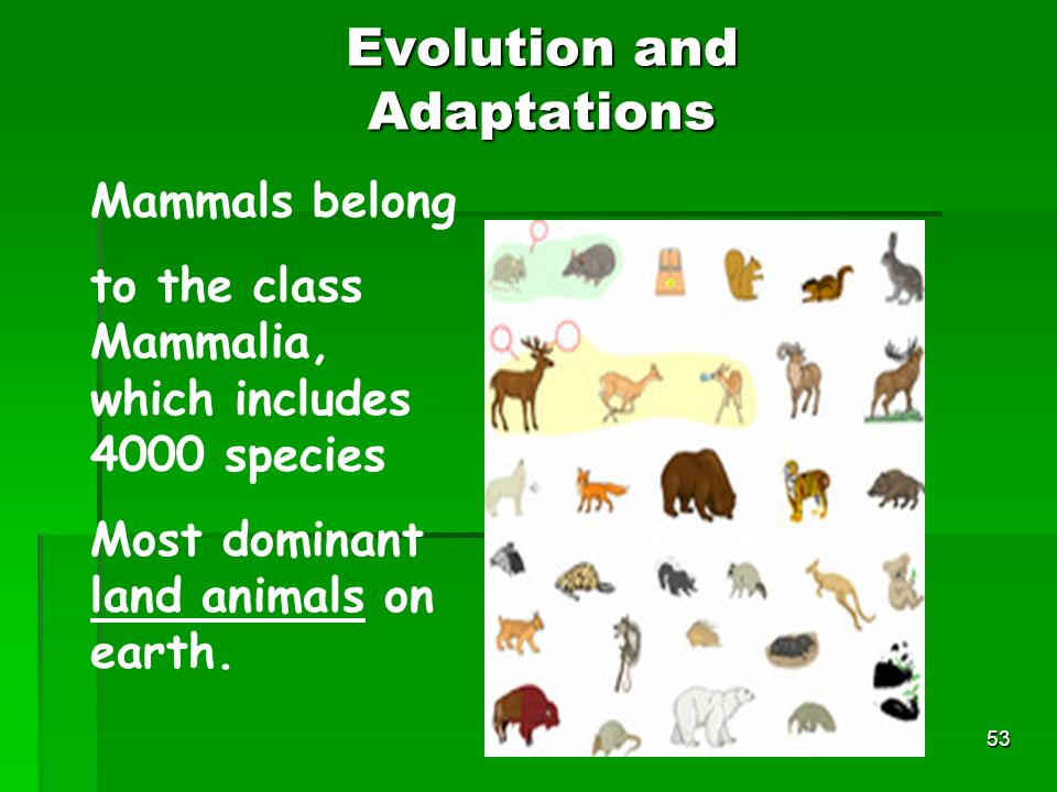 Evolution and Adaptations