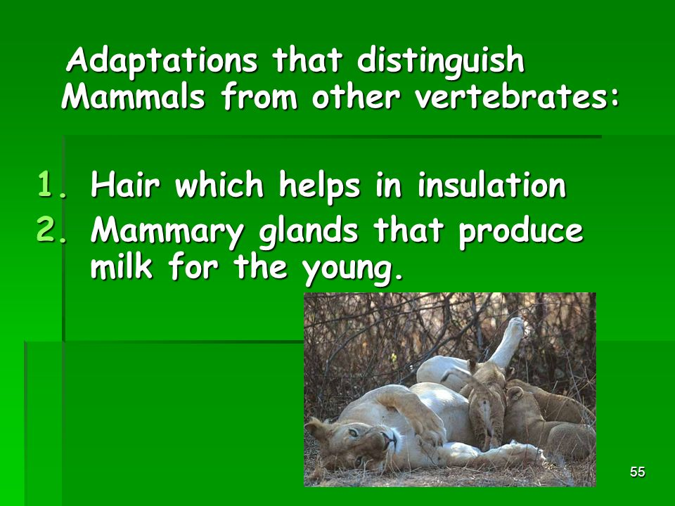 Adaptations that distinguish Mammals from other vertebrates: