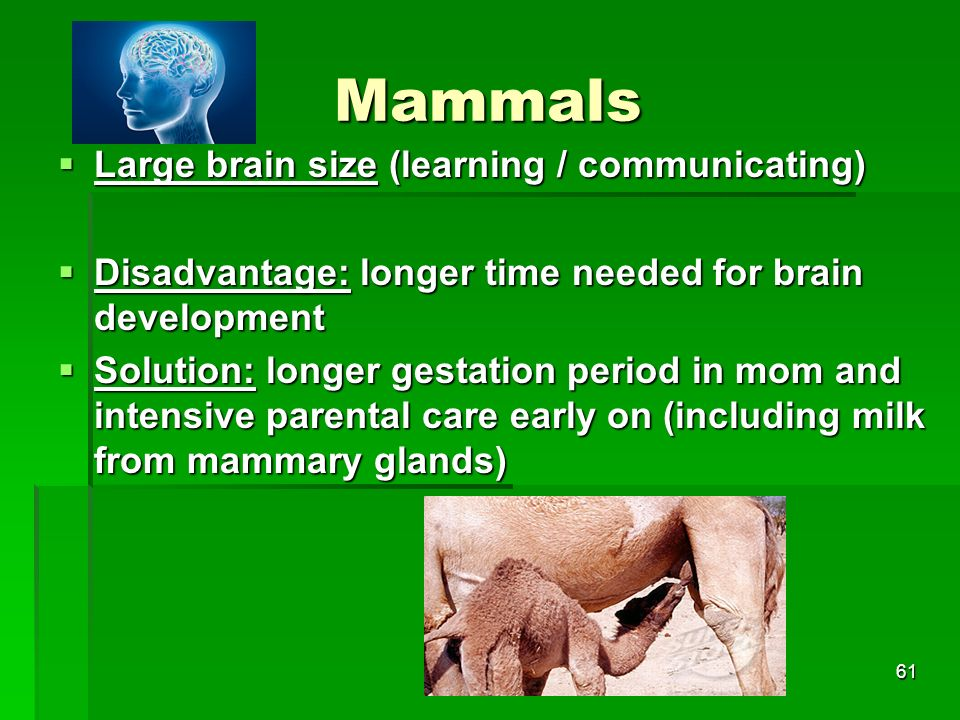 Mammals Large brain size (learning / communicating)