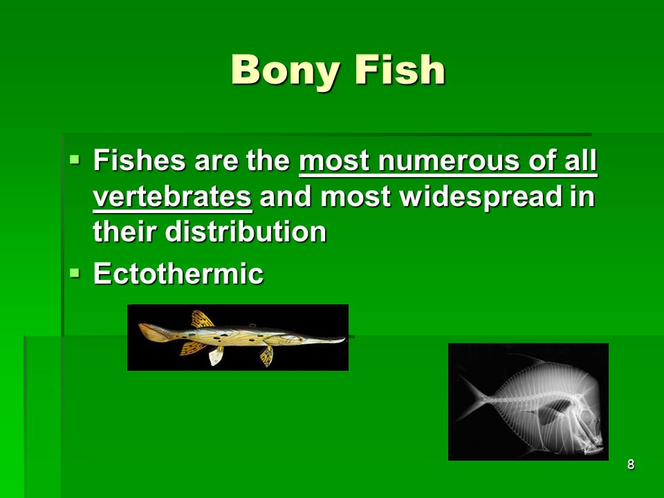 Bony Fish Fishes are the most numerous of all vertebrates and most widespread in their distribution.