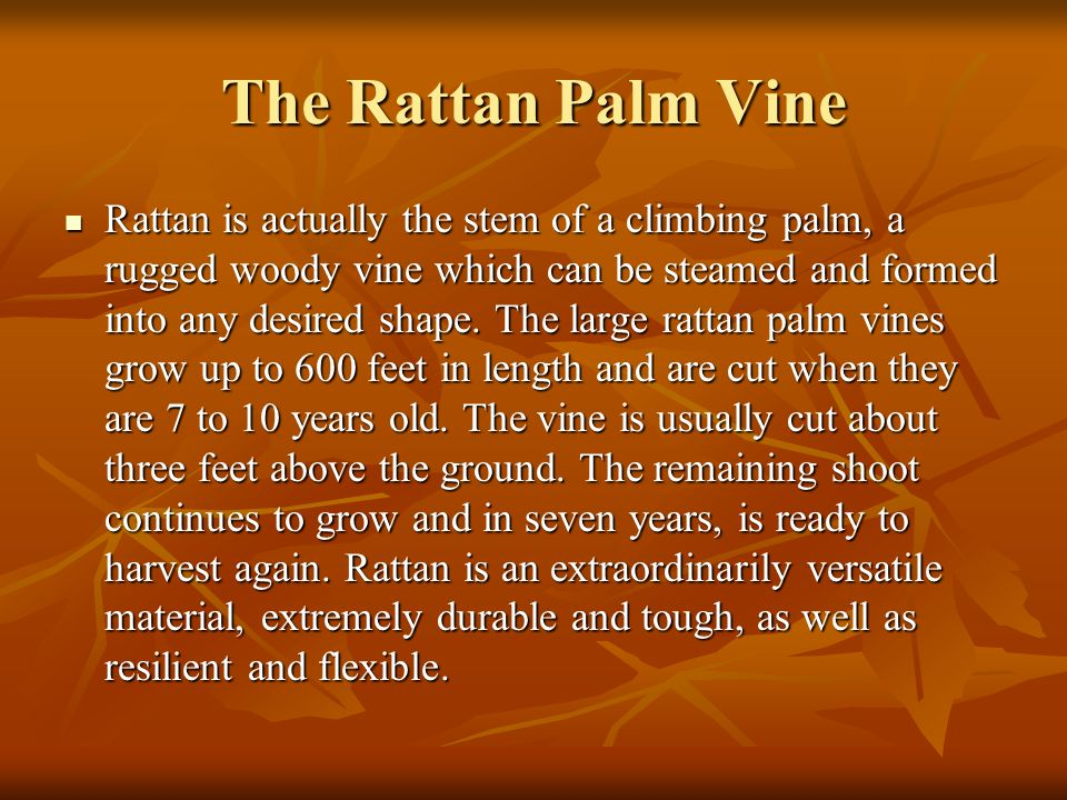 The Rattan Palm Vine