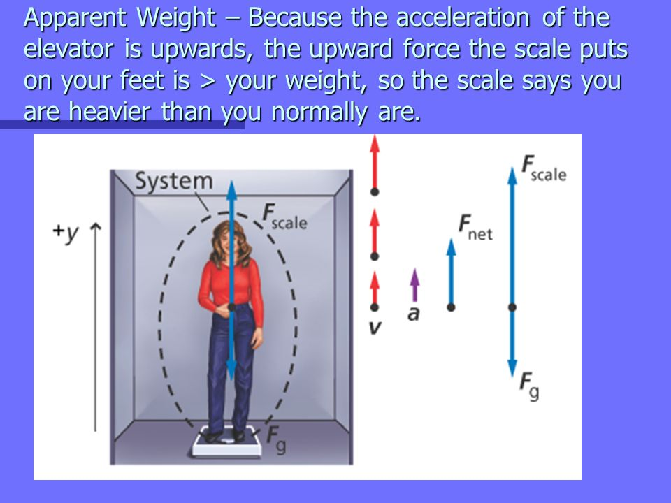 apparent weight Real weight vs apparent weight real weight - what an object actually weighs, with no forces acting upon it ex when you are weighing yourself, if the scale did not exert and upward normal force and gravity did not exert a gravitational force on your body, then you would see your real weight.