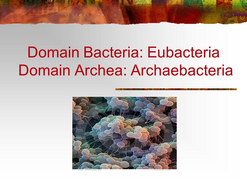 Domain Bacteria: Eubacteria Domain Archea: Archaebacteria