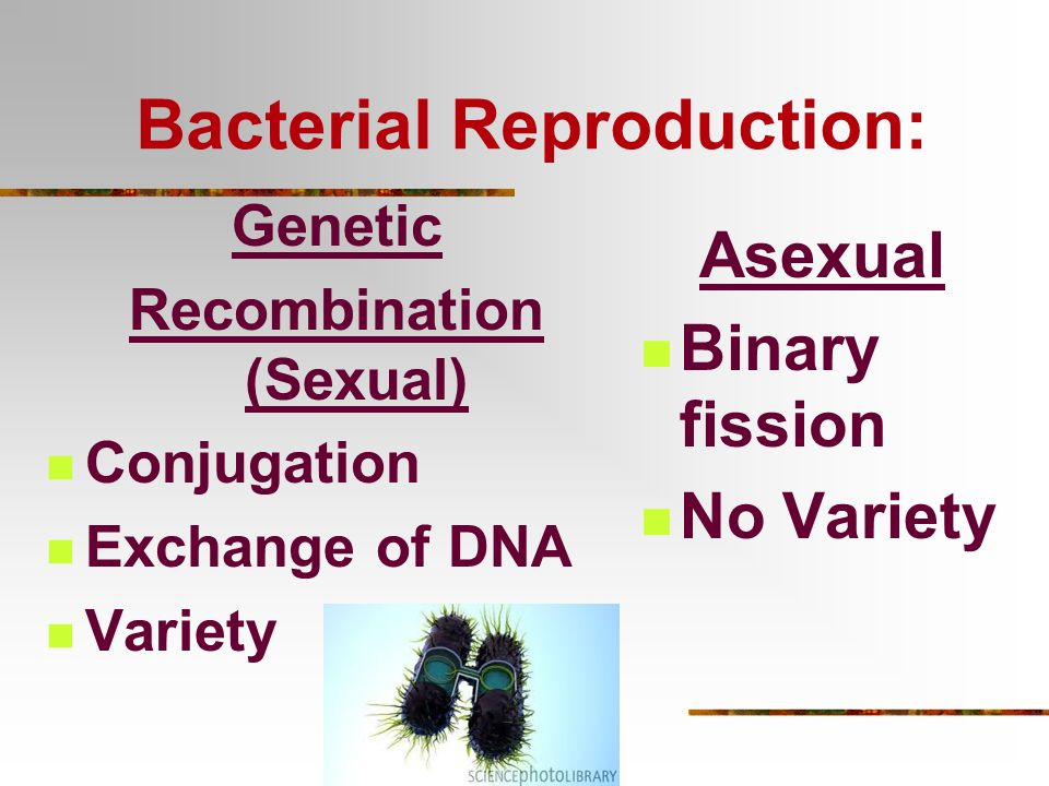 Bacterial Reproduction: