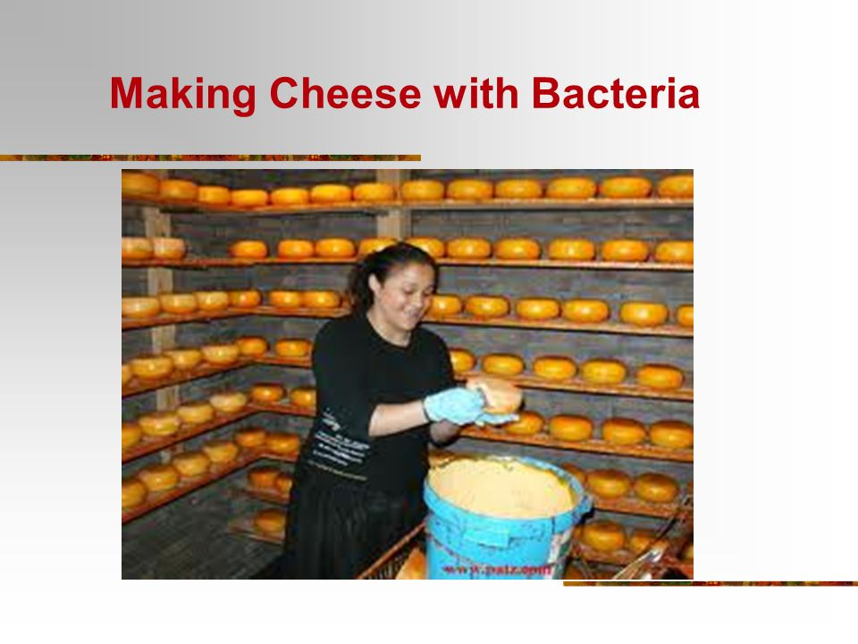 Making Cheese with Bacteria