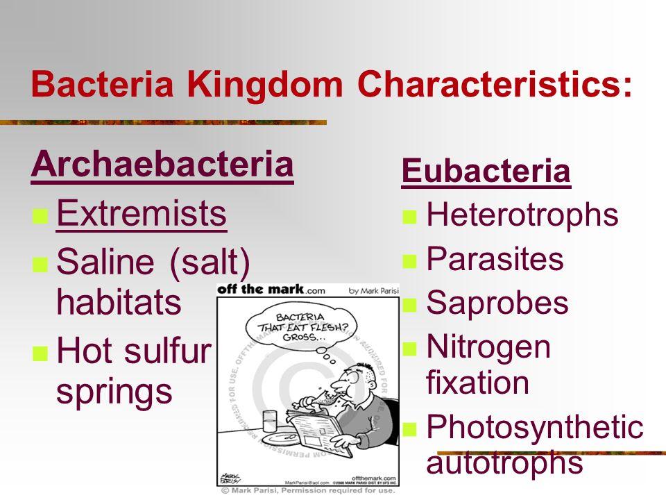 Bacteria Kingdom Characteristics: