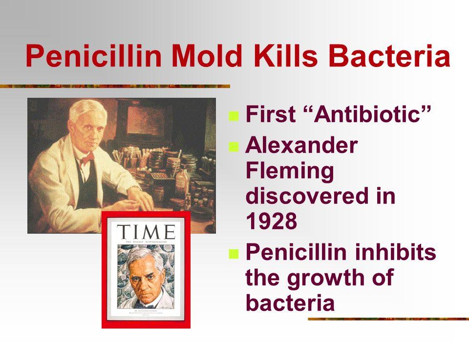 Penicillin Mold Kills Bacteria