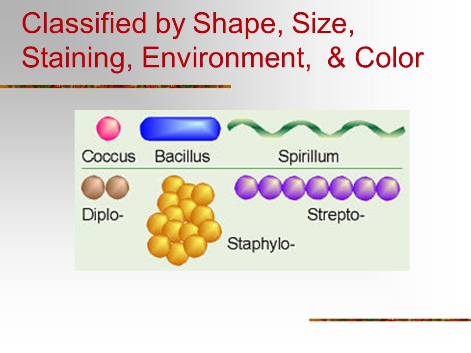 Classified by Shape, Size, Staining, Environment, & Color