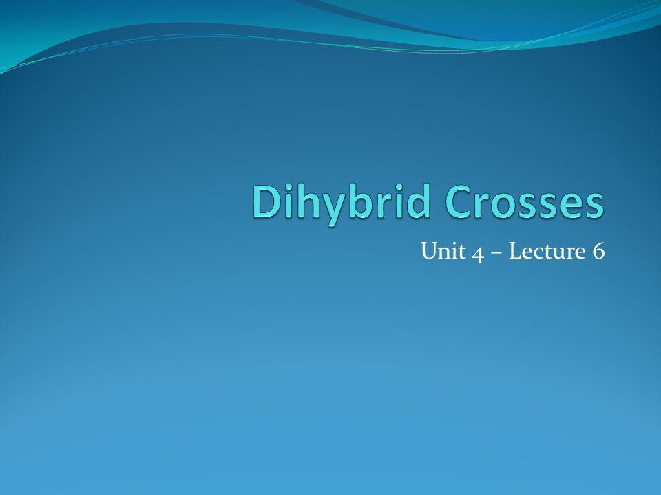 Dihybrid Crosses Unit 4 – Lecture 6