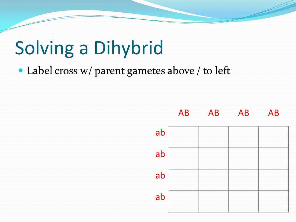 Solving a Dihybrid Label cross w/ parent gametes above / to left AB ab
