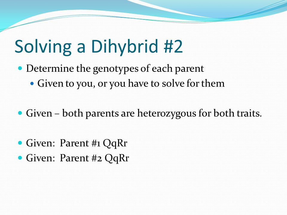 Solving a Dihybrid #2 Determine the genotypes of each parent