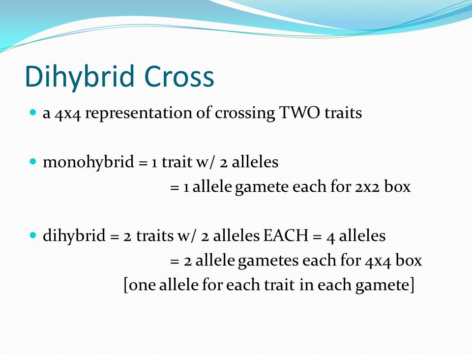 Dihybrid Cross a 4x4 representation of crossing TWO traits