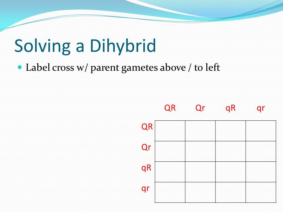 Solving a Dihybrid Label cross w/ parent gametes above / to left QR Qr