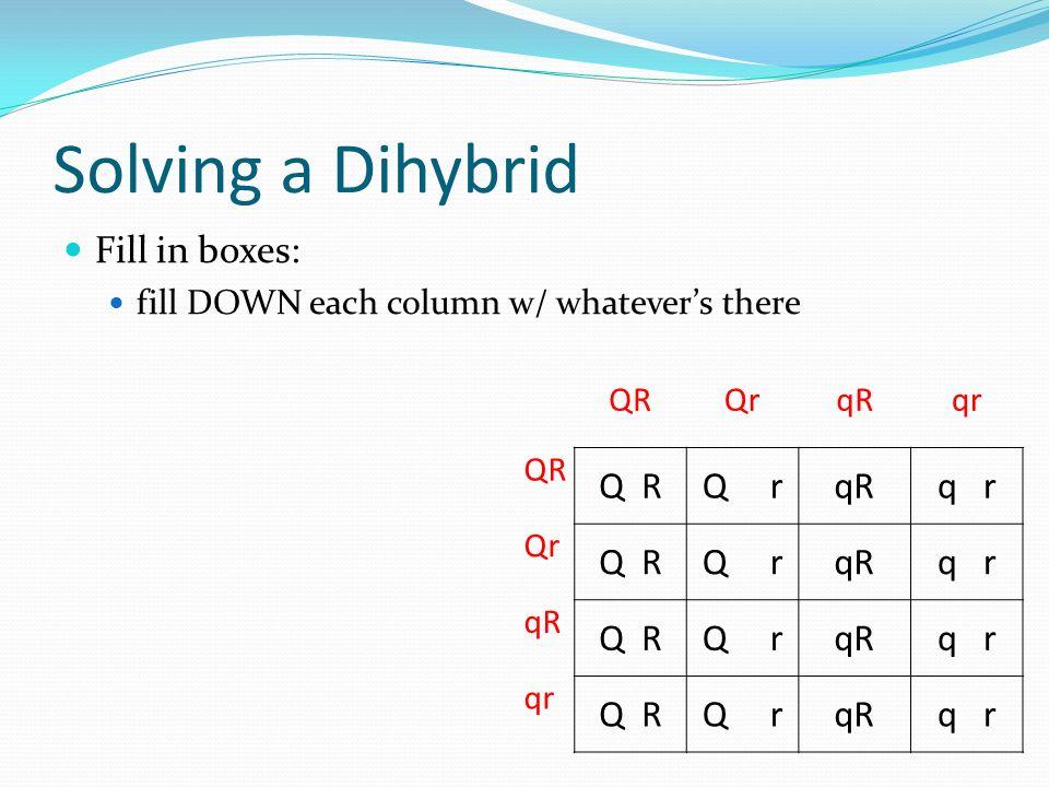 Solving a Dihybrid Fill in boxes: Q R Q r q r