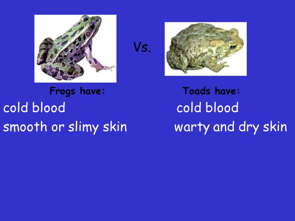 smooth or slimy skin warty and dry skin