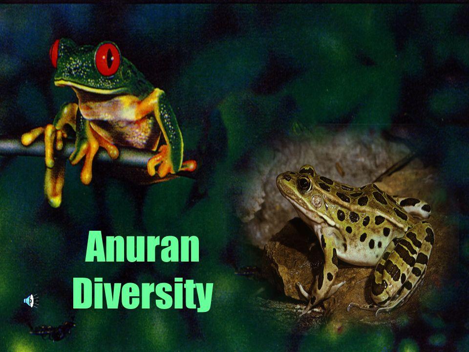 Anuran Diversity