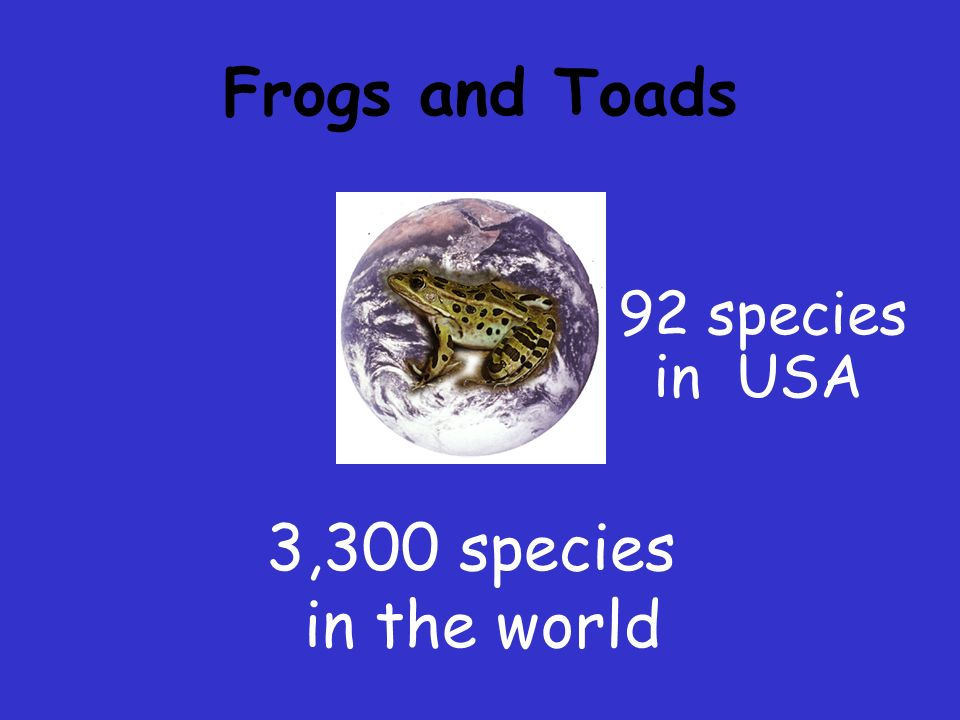 Frogs and Toads 92 species in USA 3,300 species in the world