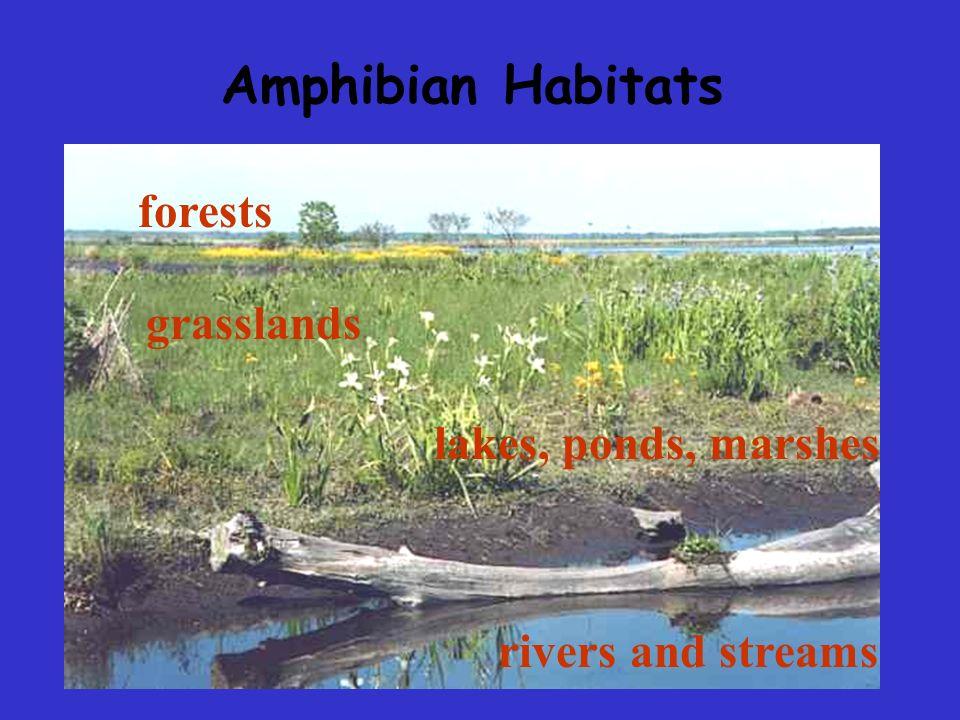 Amphibian Habitats forests grasslands lakes, ponds, marshes