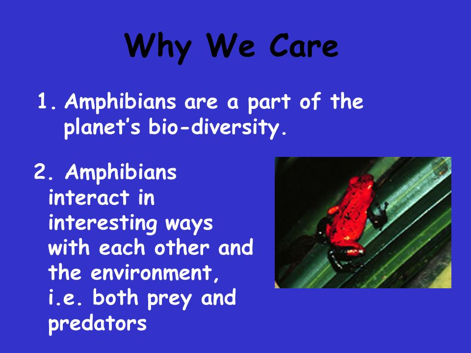 Why We Care Amphibians are a part of the planet's bio-diversity.