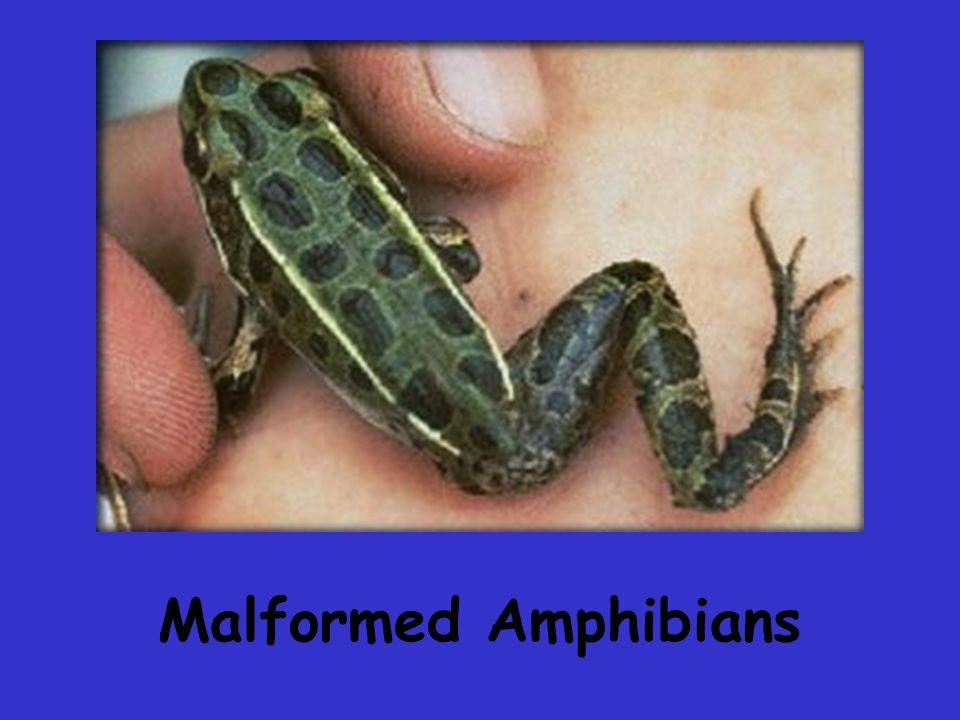 Malformed Amphibians
