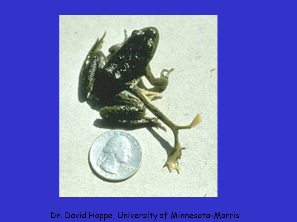 Dr. David Hoppe, University of Minnesota-Morris