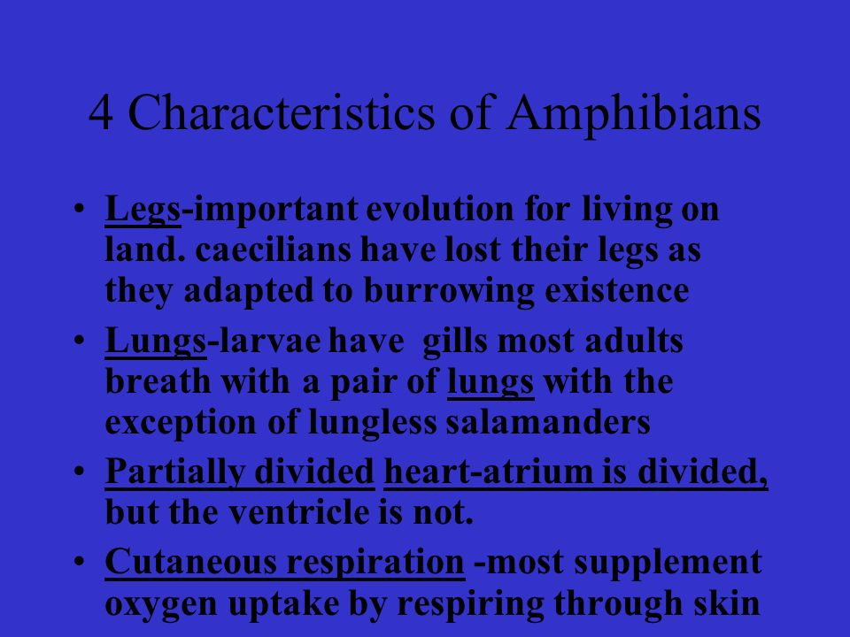 4 Characteristics of Amphibians