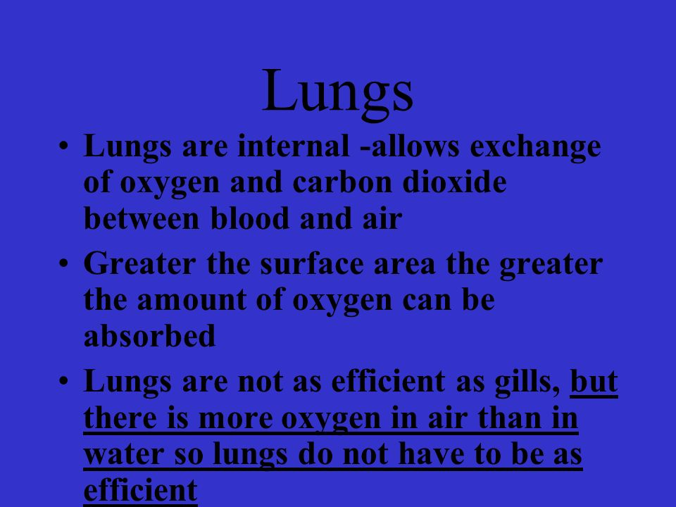 Lungs Lungs are internal -allows exchange of oxygen and carbon dioxide between blood and air.